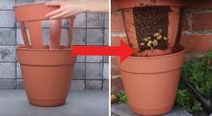 tuto vidéo faire pousser des pommes de terre dans un double pot (blacon, petit jardin)