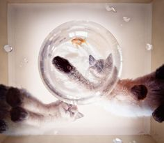 #0 through #8  These edited photos of pets look surreal!  A UK photographer takes pictures of her pets and add a bit of magic to them in photo editors. The result seems fantastic and atmospheric.