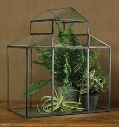 "Pierre Decorative Greenhouse by Universal Lighting and Decor. $129.91. Place your favorite plants inside the clear glass ""walls"" of this enchanting indoor greenhouse. Built in the shape of an actual single-gabled house with a zinc metal frame, this portable conservatory will keep houseplants, herbs and succulents happy, warm and humid. Also keeps plants away from curious pets and children.. Save 33% Off!"