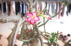 #milano#zonatortona#milanodavedere#fashion#fashionable#minimalism#minimalismo#minimalfashion#minimaphotography#photography#bestshop#italy#summer#magazine#style#fashionblogger#summerfashion#negozio by workshopmilano