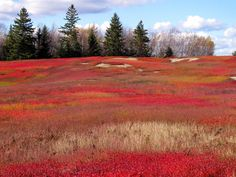 Also, let's not forget about the beautiful blueberry barrens. 39 Reasons Living In Maine Ruins You For Life