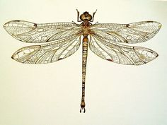 images of vintage dragonfly illustration drawings - Google Search