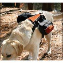 Preparing Your Pets for Disasters: The Bug-Out Bag