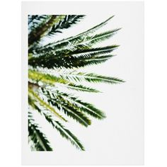 Deny Designs Chelsea Victoria - Beverly Hills Palm Art Print (43 695 LBP) ❤ liked on Polyvore featuring home, home decor, wall art, green, deny designs, deny designs home accessories, green wall art and green home decor