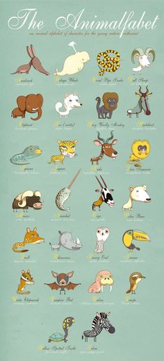 Adorable Animal Alphabet ~ by Andy Ward