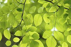 Yellow Wood Green Leaves - Fototapeten & Tapeten - Photowall