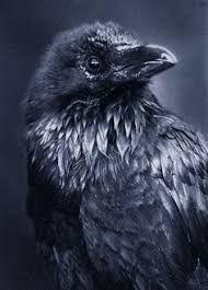 Bildergebnis für crow tattoos