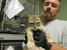 BLYTHE has been rescued by CAT ADOPTION TEAM, WILMINGTON! Shelters, Adoption, Cats, Animals, Foster Care Adoption, Gatos, Animales, Animaux, Animal Shelters