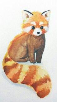 Dessin de petit panda roux