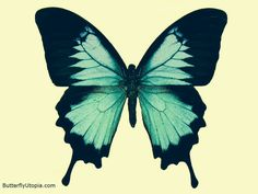 Butterfly tattoo idea; This would be wicked for my paramore butterfly tattooo ;)))