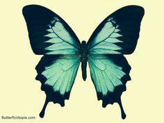 Butterfly tattoo idea