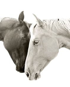 Sweet Photograph Romantic Horse photo TOGETHER by ApplesAndOats, $25.00