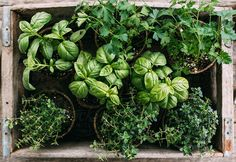 Get The Perfect Herb Garden With These Simple Tips Herb gardening is an excellent way to make sure that your family is getting the best produce that they can. You will not be using any pesticides, and since you are growing everything Herb Garden Design, Diy Herb Garden, Vegetable Garden, Garden Ideas, Bonsai, Plant Care, Farm Gardens, Farm Life, Botany