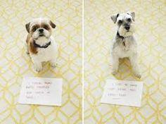 Bad dogs #dogshame