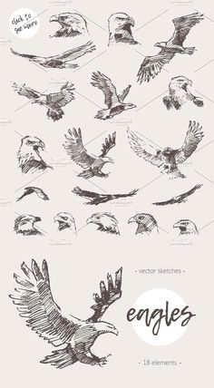 Collection of eagles, sketch style - Collection of eagles, sketch style -You can find Eagles and more on our website.Collection of eagles, sketch style - Collection of eagles, sketch style - Sketch Style Tattoos, Tattoo Sketches, Tattoo Drawings, Drawing Sketches, Tattoos For Women Small, Small Tattoos, Tattoos For Guys, Bird Drawings, Animal Drawings