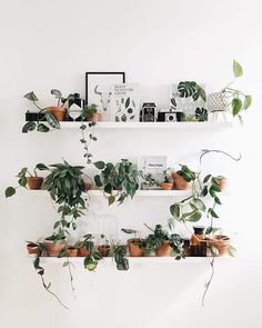 Image may contain: flower and indoor Indoor Plant Shelves, Indoor Plant Wall, Indoor Plants, Shelves With Plants, Room With Plants, House Plants Decor, Plant Decor, Room Ideas Bedroom, Bedroom Decor