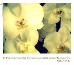 """""""Podrán cortar todas las flores pero no podrán detener la primavera."""" Pablo Neruda. Fotografía. Literatura. tpyd-tú propones y yo dispongo-artesanía-tpyyd"""
