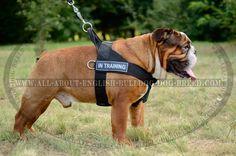 Non-Restricitive #Nylon #Dog #Harness $34.90 | www.all-about-english-bulldog-dog-breed.com