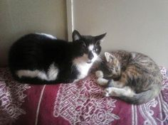 Raynie and Kiki. This pic is special because Raynie is not very social...she's 11 now and took right to the kitten...