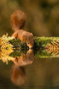 Eichhörnchen # squirrel