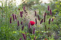 Ashleys Garden Huntingbrook Gardens