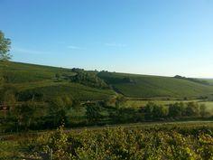 Vignoble de Courgis- Domaine de l'Erable