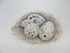 Bird Art Nature Art Watercolor Nest and Eggs by maryrichmonddesign, $45.00