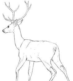 deer drawing - Google Search
