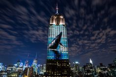 Racing Extinction Is Ready to Become the Most-Watched Documentary in History Can it also save the world in the process?