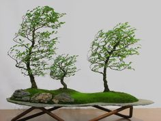 Beautiful Bonsai in blowing in the wind