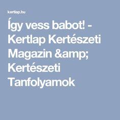 Így vess babot! - Kertlap Kertészeti Magazin & Kertészeti Tanfolyamok