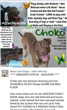 MURDERED 8/20/16 Brooklyn Center My name is CHOKO. My Animal ID # is A1085357. I am a male brown and white am pit bull ter and germ shepherd mix. The shelter thinks I am about 2 YEARS I came in the shelter as a OWNER SUR on 08/14/2016 from NY 11207, owner surrender reason stated was MOVE2PRIVA. http://nycdogs.urgentpodr.org/choko-a1085357/