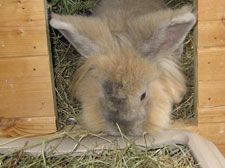 Rabbit advice & tips on everything you need to know about looking after rabbits. Best food, housing & toys. Which hay to feed to your bunny.