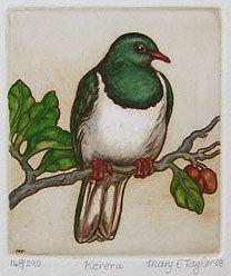 We had keruru in our garden when we were kids. Class Art Projects, New Zealand Art, Kiwiana, Rare Birds, Iron Art, Cruise Ships, Watercolor Animals, Bird Prints, Wild Life