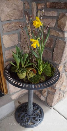 Have a Daily Cup of Mrs. Olson. . .blooming birdbath