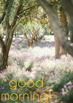 *** 151108 ***  Good Morning Card for Media with Trees and Flowers