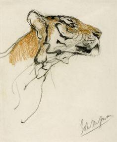 Tiger sketches by John Macallan Swan [British, 1847-1910]