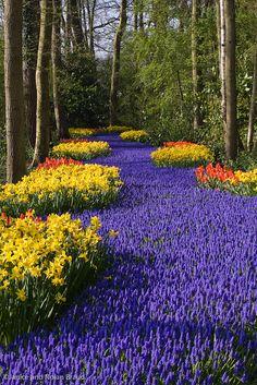 Muscari, Tulips, and Daffodils