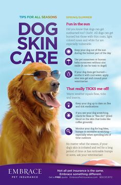 Your pet's skin is just as sensitive as yours. These tips will help keep your pet's skin safe all summer. For more pet tips, click here- http://www.embracepetinsurance.com/Health/default.aspx