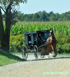 Amish Country, Indiana.  l love this, it so reminds me of growing up and great friends and neighbors.