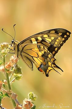 Swallowtail Butterfly on Flower nature photo ~ All Beauty All the Time