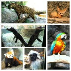 Get in touch with out wild side at Chattanooga Zoo in Chattanooga, TN #microcation