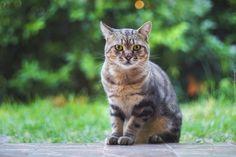 Bury, Kot, Zieleń