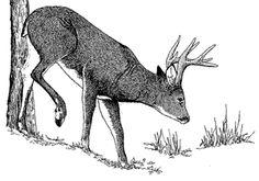 Repelling Deer Rabbit Repellent, Deer Repellant, Bump, Homestead, Helpful Hints, Moose Art, Fishing, Yard, Outdoors