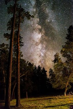 Milky Way shining bright over backcountry campsite in Apache National Forest, Arizona by Steve Dacosta