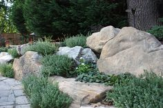 Pool 5  Boulder wall with lemon-scented thyme