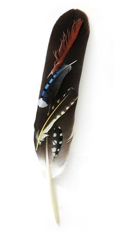 eagle feather | STILL (mary jo hoffman)