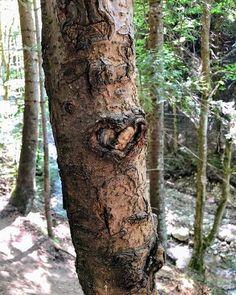 Prin Canionul 7 Scări găsești și câteva #inimi. Merită vizitat mai ales după lucrările de reamenajare din 2013. Mai, Nature, Plants, Photos, Travel, Instagram, Naturaleza, Pictures, Viajes