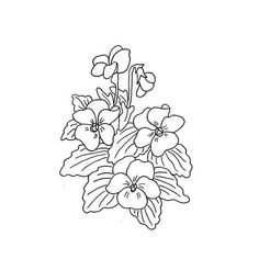 drawings of african violets - Google Search