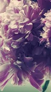 Image result for peonies wallpaper